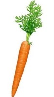 Every 10 g carrot reduces chance of prostate cancer by 5 percent