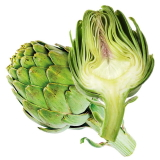 Artichoke may protect testes against anabolic steroids