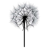 Dandelion-based testosterone therapy?