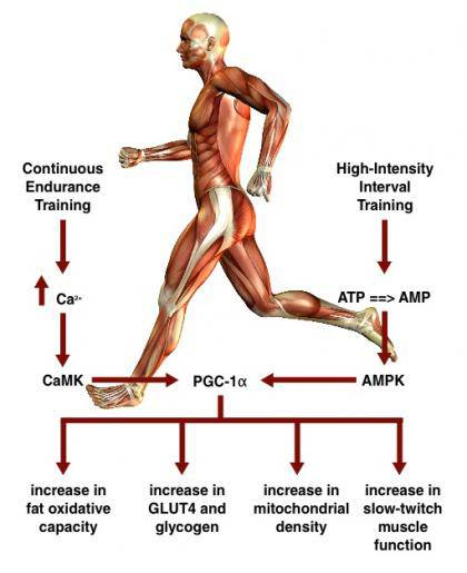 Meta-study compares interval training with traditional endurance training